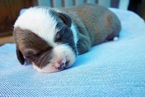Newborn Puppy 2