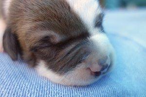 Newborn Puppy 4