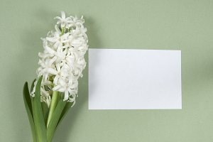 Hyacinth flowers and place for text