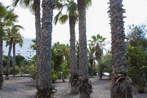 garden beach in Tenerife