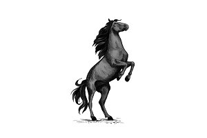 Wild horse racer rearing vector sketch