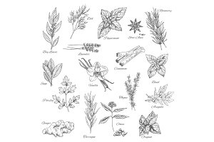Herbs and spices vector sketch icons
