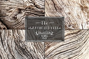 Weathered tree, set of 13 images