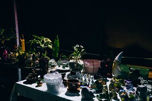 Potted Plants Chiarascuro