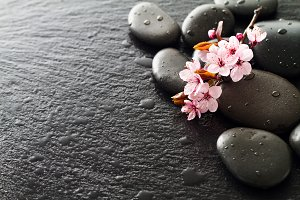 Spa Concept. Pink Flowers on Stones