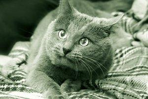 Phenomen of cat