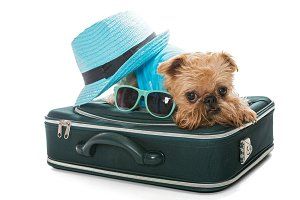 Dog and a travel suitcase