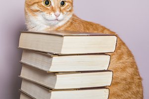 Cat and books