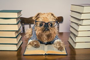Serious dog in glasses and books