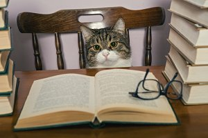 Serious cat  and books