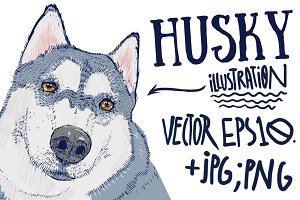 Husky illustration.