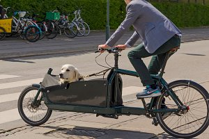 Dog transportation in a bike