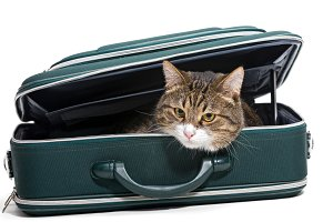 Cat and a green suitcase