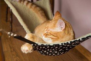 Happy ginger cat sleep