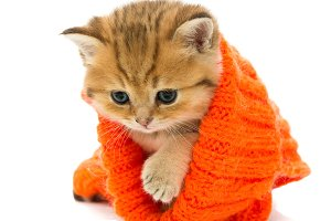 Small kitten in a knitted sweater