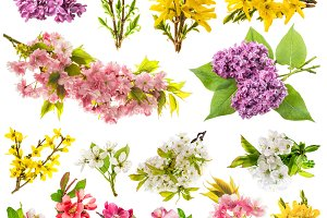 Collection spring flowers JPG