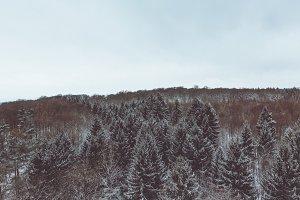 winter forest tree landscape