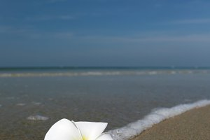 white flower and beach