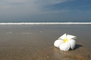 white flower land beach