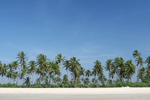 coconut palms near the ocean