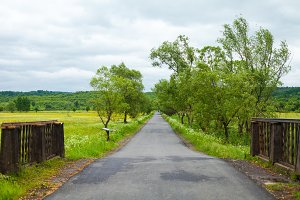 Country road with trees and fence