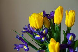 Beautiful tulips and violets