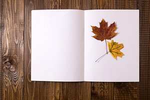 Blank sheet of paper with a dried leaf