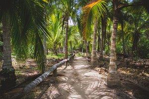 Palm Tree Paradise Path