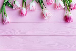 Pink background and tulips.