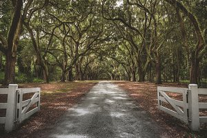 Savannah Tree Roadway