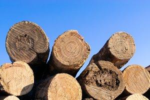 Closeup Detail of Tamarack Logs