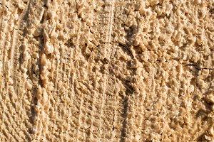 Closeup of Insect Damaged Tamarack