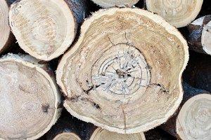 Tamarack Log Pile