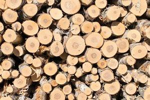 Paper Birch Log Ends