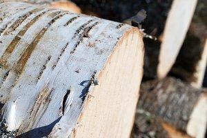Closeup of Birch Log Pile