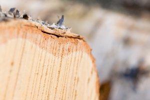 Blurred Birch Log