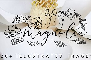 20+ Magnolia Flower Illustrations