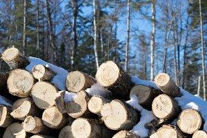 Aspen Logs in Winter