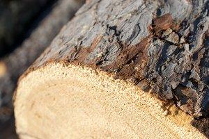 Closeup of Larch Log