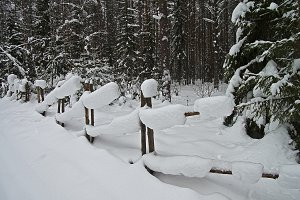 Snowbound Hurdle in Winter Forest