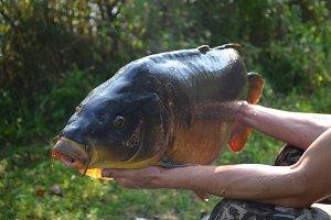 Catchy carp