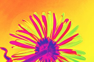 Flower in hyper vivid colours