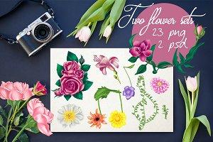 Two flower set illustrations
