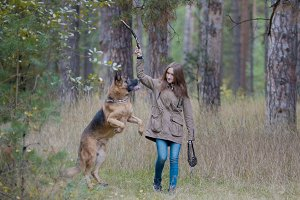 Young pretty female model playing with her pet - german shepherd - walking on a autumn forest - girl throws the dog a stick