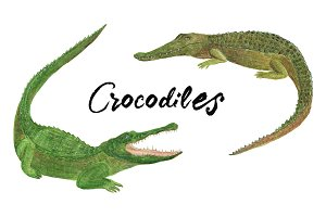 Watercolor crocodiles