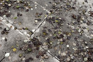 Sidewalk in Autumn.jpg