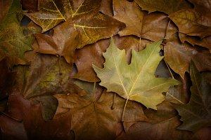 Last Leaf Fall.jpg