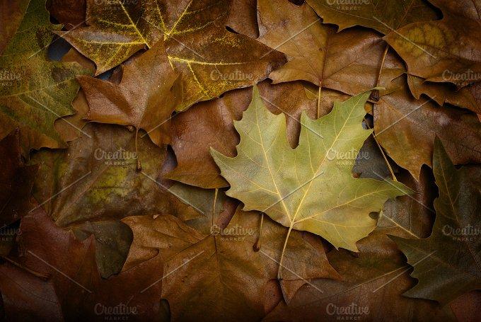 Last Leaf Fall.jpg - Nature