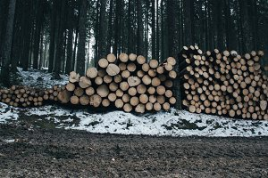 Wooden Logs in Forest Background