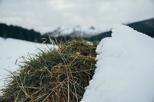 Grass, Snow and Mountains in behind
